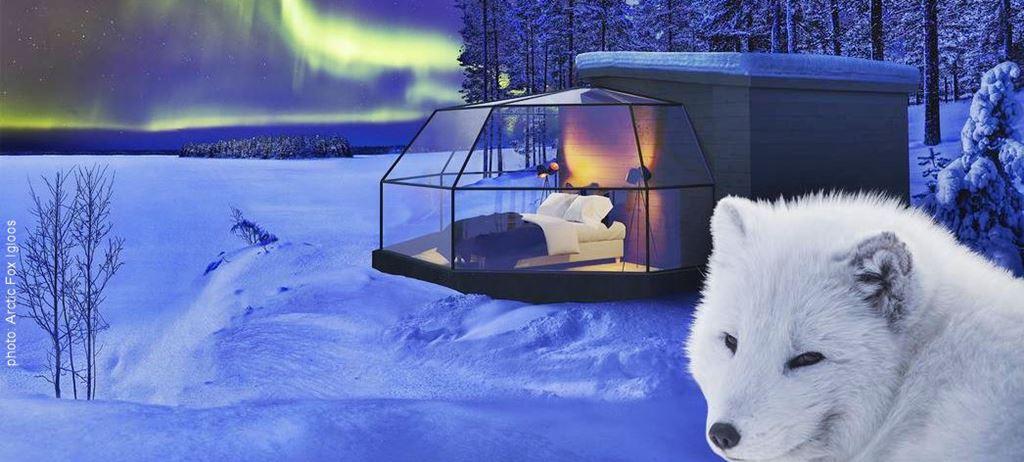 Arctic Fox Igloos
