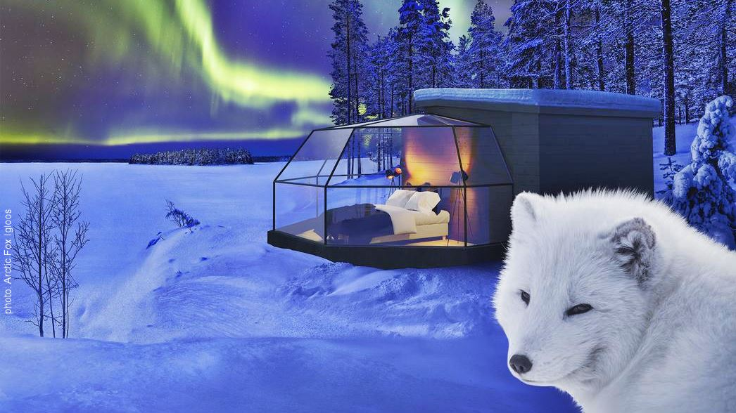 Arctic Fox Igloos