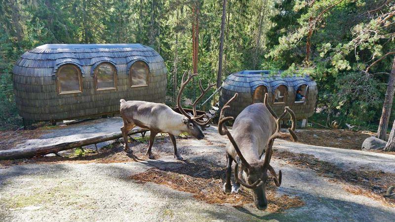 Igluhut – Sleep with reindeer