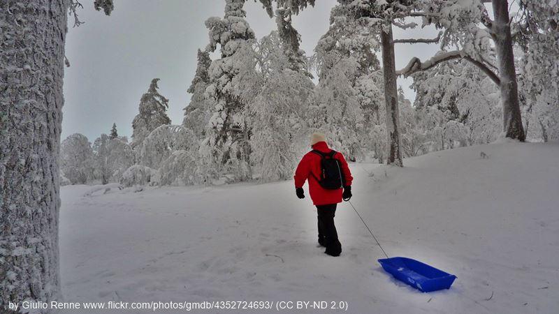 Saariselka winter forest view